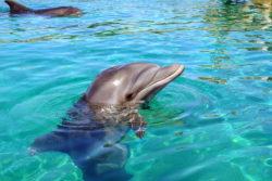 Дельфинарий Эйлата: цены, плавание с дельфинами