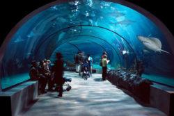 Океанариум в Эйлате: цена, время работы, как доехать на автобусе