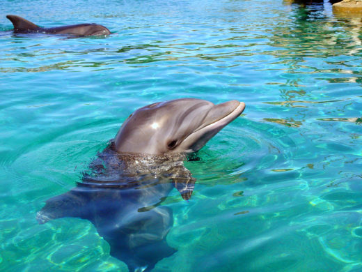 Дельфинарий Эйлата