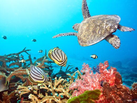 Есть ли кораллы в Эйлате